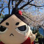 桜も満開、静岡まつり、浅間神社の廿日会祭とイベント盛りだくさんの週末、皆さんいかがお過ごしでしょうか?